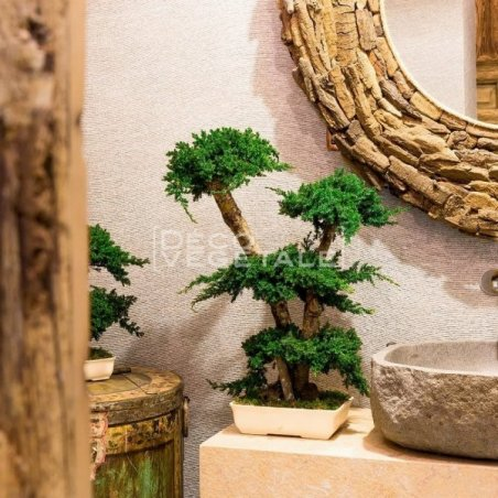Plante Stabilisée Bonsaî Juniperus  Création Originale de Déco Végétale