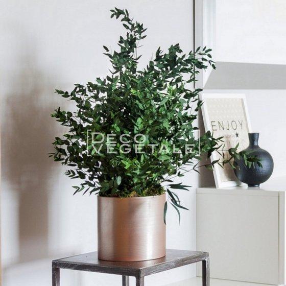 Plante Stabilisée Bouquet d'Eucalyptus Création Originale de Déco Végétale