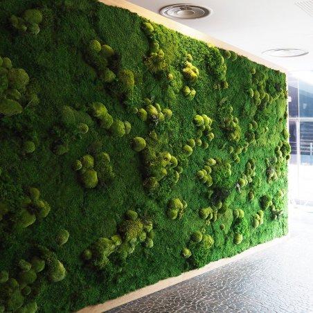 Mur Végétal Stabilisé MUR VEGETAL PROVENCE Création Originale de Déco Végétale