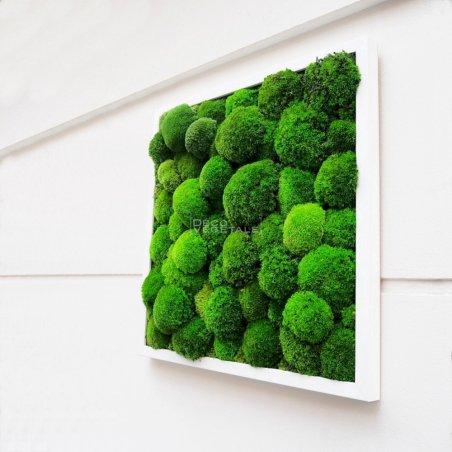 Tableaux Végétal Stabilisé Green Star Création Originale de Déco Végétale