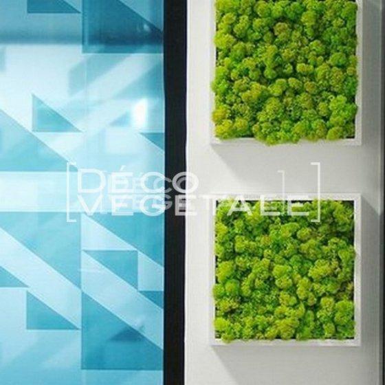 Tableaux Végétal Stabilisé Daintree Forest Création Originale de Déco Végétale