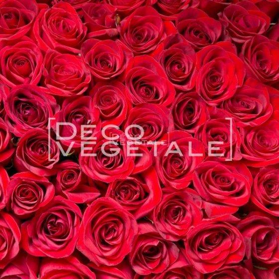 Mur Végétal Stabilisé MUR DE ROSES Création Originale de Déco Végétale