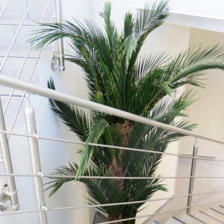Plante Stabilisée Palmier Kentia Création Originale de Déco Végétale