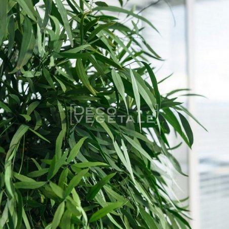 Plante Stabilisée Eucalyptus Nicoly large Création Originale de Déco Végétale