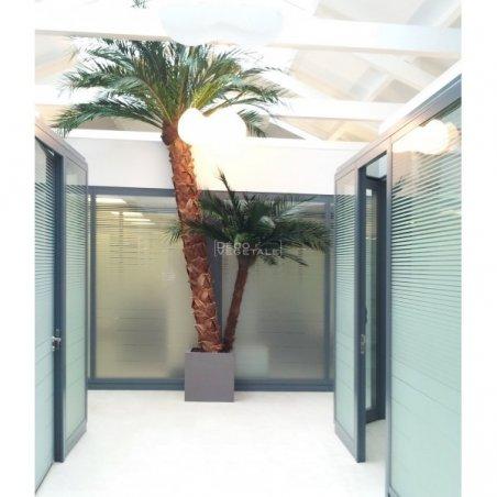 Plante Stabilisée Palmier Phoenix Création Originale de Déco Végétale