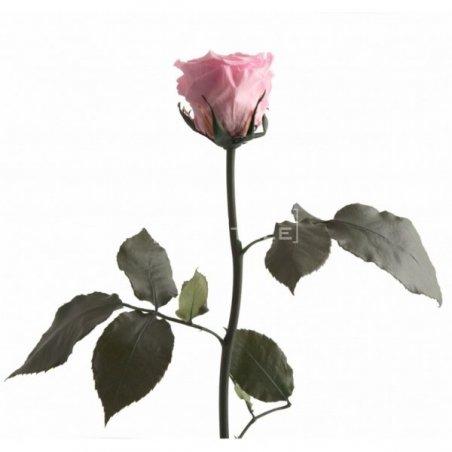Composition Florale Stabilisée La vie en Rose Création Originale de Déco Végétale