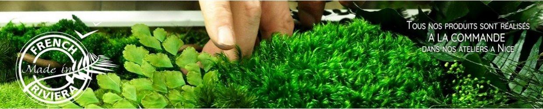 Tableau végétal original : nos créations en végétaux stabilisés