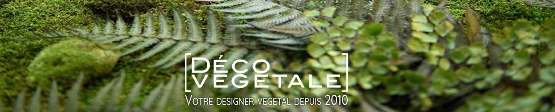 Muros vegetales naturales estabilizados sin mantenimiento, agua o luz